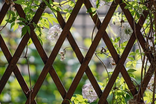 Doplněk zahrady i pokračování obytného prostoru: dřevěná pergola
